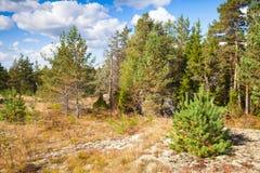 Wild natural landscape, forest edges in Karelia Stock Images