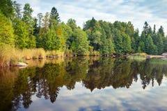 Wild natural landscape, trees grow on lake coast Royalty Free Stock Image