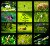 Wild nature. Composition twelve photos green patterned background with lines Royalty Free Stock Photo