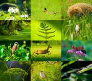 Wild nature. Composition twelve photos green patterned background with lines Stock Photo