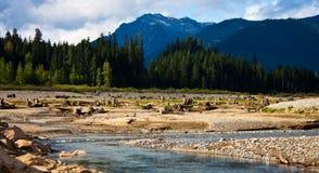 Wild nature Stock Photos