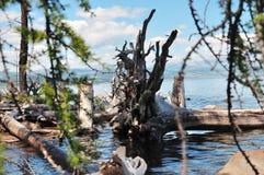 Wild nature. Royalty Free Stock Photo