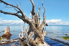 Wild nature. Stock Image