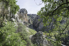 The wild nature of andalusia Royalty Free Stock Photography