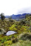 Wild nature in el cajas national park in the andes of ecuador royalty free stock photos