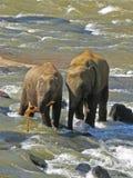 Wild nature. Elephants. Stock Image