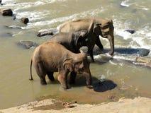 Wild nature. Elephants. Stock Photo