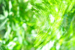 Nature - Fern close-up in sunny forest Stock Image