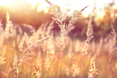 Wild nature field landscape Stock Photography