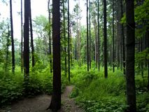 Wild nature forest , trail to the ocean of the unknown Royalty Free Stock Photos
