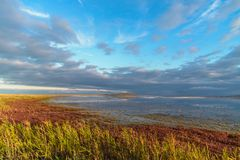 Wild nature landscape with salt lake, green and red grass and cloudy blue sky at sunrise. Autumn stock image