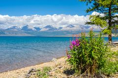 Wild nature of Mongolia. A beautiful view of Lake Hovsgol and the Eastern Sayan Ridge. On a sunny summer day royalty free stock photos