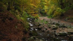 Wild Nature. Mountain River In A Forest. National Park. Ukraine stock video