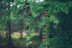 Wild nature and rainy weather consent. Royalty Free Stock Photography