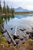 Wild nature in Rocky Mountains,Lake Shore Stock Images
