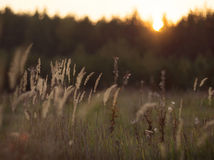Wild nature of Russia in the summer. Stock Photography