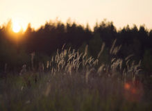Wild nature of Russia in the summer. Royalty Free Stock Image