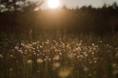 Wild nature of Russia in the summer Royalty Free Stock Photography
