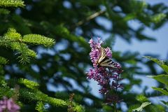 Nature setting with wild flowers and butterfly stock photography