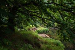 Wild nature under river Stock Photos
