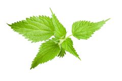 Wild nettle. Isolated on white stock photography