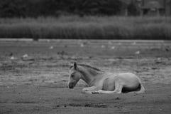 Wild Nieuw Paard Forrest Stock Foto's