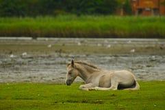 Wild Nieuw Paard Forrest Royalty-vrije Stock Afbeeldingen