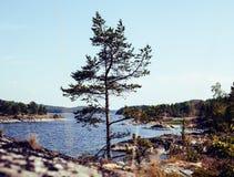 Wild north nature landscape. lot of rocks on lake shore post car Royalty Free Stock Photo