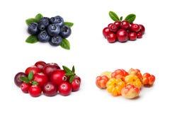 Wild northern berries Stock Photos