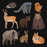 Wild northern forest animals set, hedgehog, raccoon, squirrel, deer, fox, bear cub, wild boar, hare vector Illustrations. Isolated on a black background Stock Image