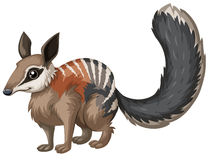 Wild numbat with happy face Stock Photography