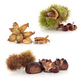Wild Nuts Royalty Free Stock Photos