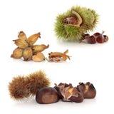 Wild Nuts Royalty Free Stock Photos