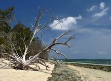 Wild oceaanstrand stock afbeelding