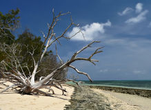 Wild Ocean Beach Stock Image