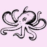 Wild ocean octopus Stock Images