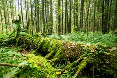 Wild old forest. Colorful green nature background. Woods landscape Stock Images