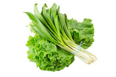 Wild onion and lettuce Stock Images