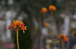 Orange color flower stock images