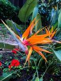 Wild orange flower on bush stock images