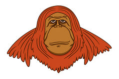 Wild Orangutan Cartoon Animal Character Stock Photography