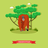 Wild orangutan vector illustration in flat style. Monkey - zoo animal design elements and icons.  Stock Photography