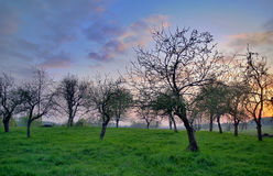 Wild orchard during sunset Stock Photo