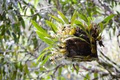 wild orchid arkivfoto