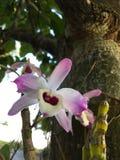 wild orchid Fotografering för Bildbyråer