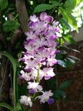 wild orchid Arkivfoton