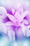 Wild Orchid. Royalty Free Stock Image