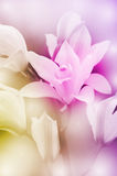 Wild Orchid. Stock Photography