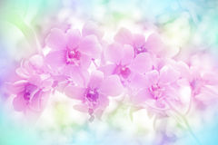 Wild Orchid. Stock Photo