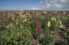 Wild orchid flower field Royalty Free Stock Photo